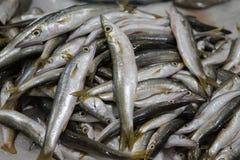 Verse vissen voor verkoop in Doubai royalty-vrije stock afbeeldingen