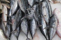 Verse vissen voor verkoop in Doubai royalty-vrije stock foto