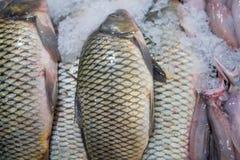 Verse vissen voor verkoop in Doubai stock foto's
