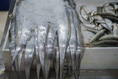 Verse vissen voor verkoop in Doubai stock afbeelding