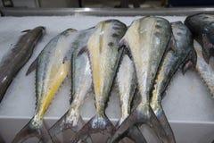 Verse vissen voor verkoop in Doubai stock foto
