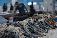 Verse vissen voor verkoop in Doubai stock afbeeldingen
