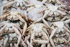 Verse vissen voor verkoop in Doubai royalty-vrije stock fotografie