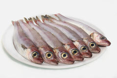 Verse vissen in witte schotel stock foto