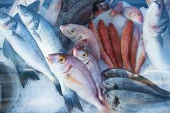 Verse vissen in zeevruchten storefront Royalty-vrije Stock Foto's