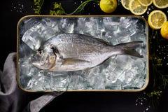 Verse vissendorada, brasem op ijs in een metaalschotel op een zwarte achtergrond, hoogste mening Stock Fotografie