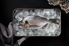 Verse vissendorada, brasem op ijs in een metaalschotel op een zwarte achtergrond, hoogste mening Royalty-vrije Stock Fotografie