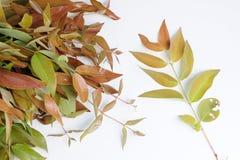 Verse wilde plantaardige bladeren royalty-vrije stock foto