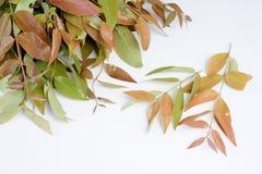 Verse wilde plantaardige bladeren royalty-vrije stock afbeelding