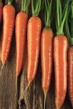 Verse wortel Stock Foto