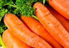 Verse wortel Stock Afbeelding