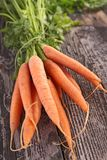 Verse wortel Royalty-vrije Stock Foto's