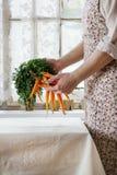 Verse wortel in vrouwelijke handen royalty-vrije stock foto