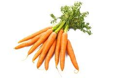 Verse wortelen Stock Afbeeldingen