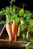 Verse wortelen en groene erwt royalty-vrije stock fotografie