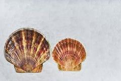 Verse zeevruchten stock foto's