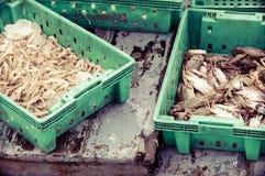 Verse zeevruchten in dozen bij de vissenmarkt Stock Foto