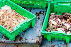 Verse zeevruchten in dozen bij de vissenmarkt Royalty-vrije Stock Afbeeldingen