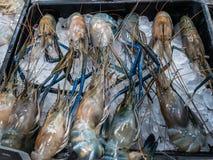 Verse zeevruchten met inbegrip van Oester, Shell, pijlinktvis en garnalen in ijsmand Stock Afbeelding