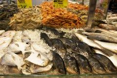 Verse Zeevruchten voor Verkoop Royalty-vrije Stock Fotografie