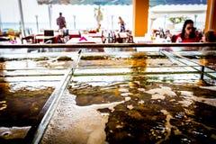Verse zeevruchten voor verkoop binnen van verdeeld aquarium in een restauran royalty-vrije stock afbeelding