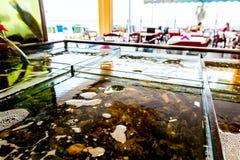 Verse zeevruchten voor verkoop binnen van verdeeld aquarium in een restauran stock afbeelding