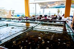 Verse zeevruchten voor verkoop binnen van verdeeld aquarium in een restaurant stock afbeeldingen