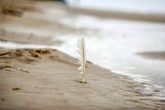 Versehen Sie Stock im Sand, am Strand durch das Batlic-Meer, Polen, Herbstzeit mit Federn Stockbilder