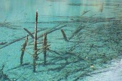 Versenkte Klotz, Türkis-Wasser Stockbild
