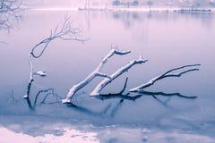Versenkte Winterbaumaste Stockfoto