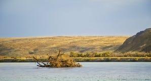 Versenkter Baum im Fluss auf einem Hintergrund von Bergen Stockbild