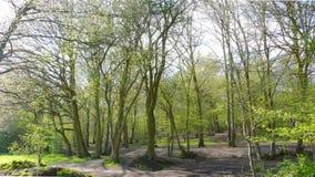 Versión 1 de la vista de árbol imagen de archivo