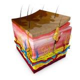 Versicolor Tinea is een voorwaarde door een huiduitbarsting die wordt gekenmerkt stock illustratie