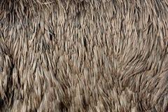 Versieht Beschaffenheit eines Straußes mit Federn stockfoto