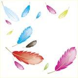 Versieht colorfull mit Federn stockbilder