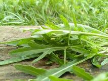Versier bio bron detox bladerenhout stock foto