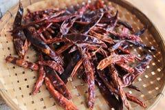 Versier droge Spaanse pepers Thailand bij het dorsen van mand stock afbeeldingen