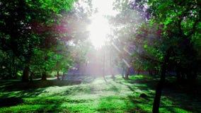 Version artistique 1 de lumière du soleil de matin images stock