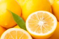 Orizzontale del primo piano del limone di Meyer Fotografia Stock Libera da Diritti