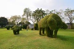 Versionen 1 för elefantträd Arkivbilder