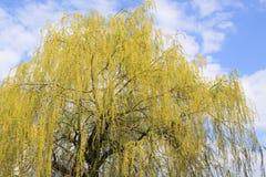 Verso il cielo alberi Immagini Stock