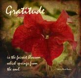 Verso inspirado en un fondo rojo hermoso de la flor en un final Painterly foto de archivo