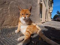 Verspilde kat stock afbeelding