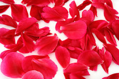 Verspreide bloemblaadjes royalty-vrije stock afbeeldingen
