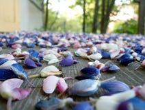 Verspreide bloemen Stock Foto's
