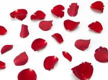 Verspreide rood nam bloemblaadjes toe Stock Fotografie