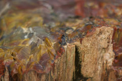 Verstard hout Royalty-vrije Stock Afbeelding