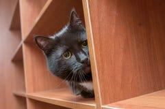 Verstecken der schwarzen Katze Stockfoto