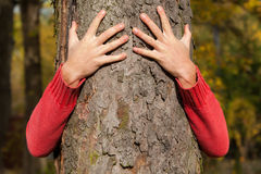 Verstecken hinter dem Baum Stockfotos