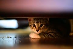 Verstecken Sie sich und gehen Sie Miezekatze Stockfotos